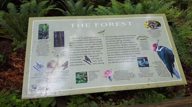Info. about the forest
